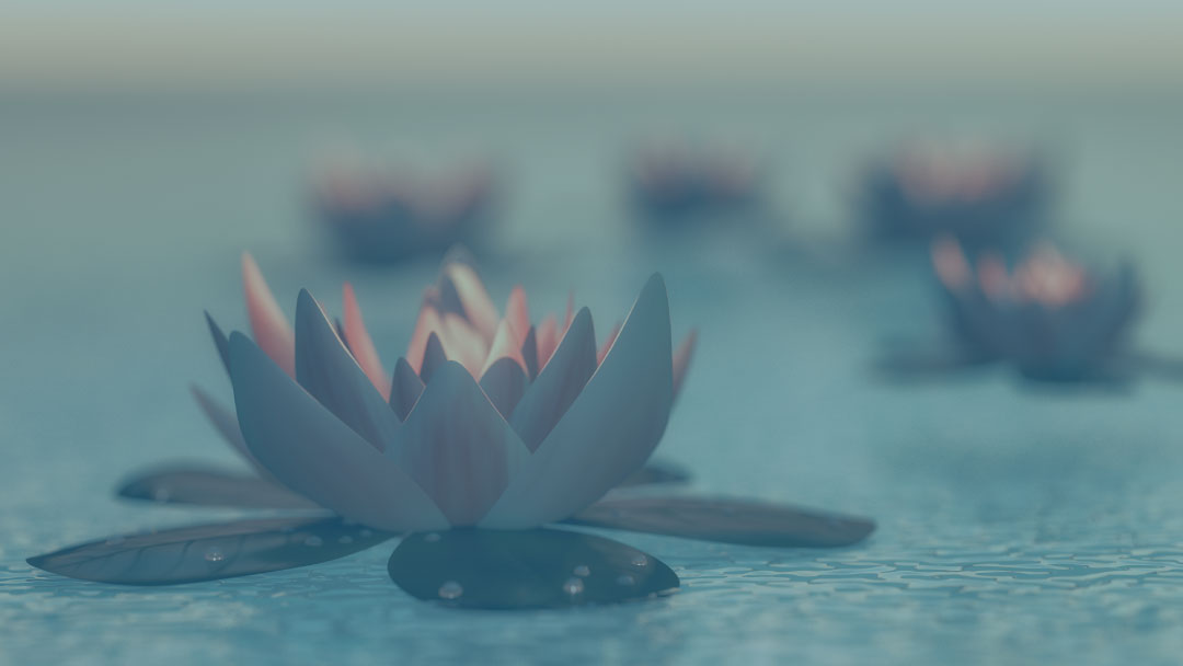 A lotus flower with blue filter